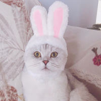 Cute Bunny Headgear Cat Headgear Transformed Cat Headwear Dog Headgear Pet Hat Teddy Bunny Ears