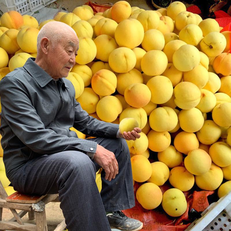10斤现摘现发砀山黄桃新鲜水果包邮应季整箱毛桃水蜜桃油桃黄桃子