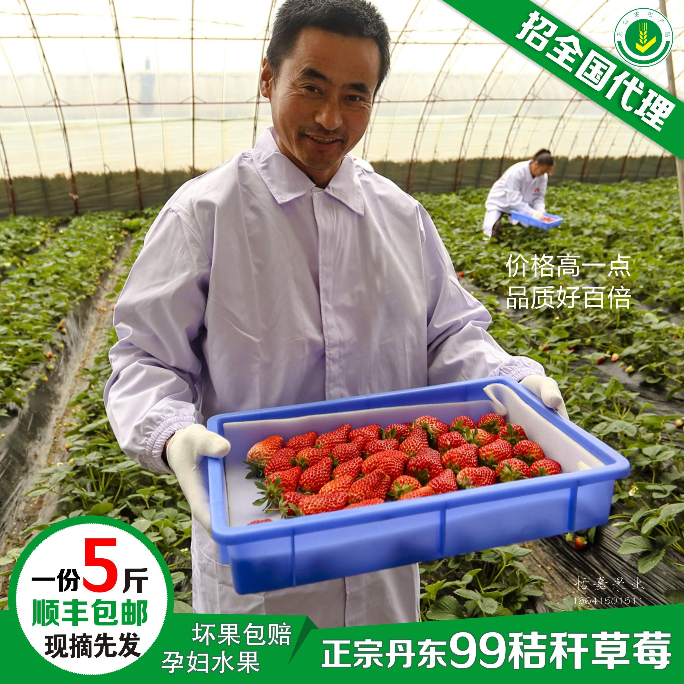 新鲜丹东草莓99草莓红颜九九马家岗秸秆牛奶草莓5斤装顺丰包邮