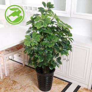 发财树仿真绿植客厅盆栽假树装饰落地盆景假花大型塑料植物仿真花