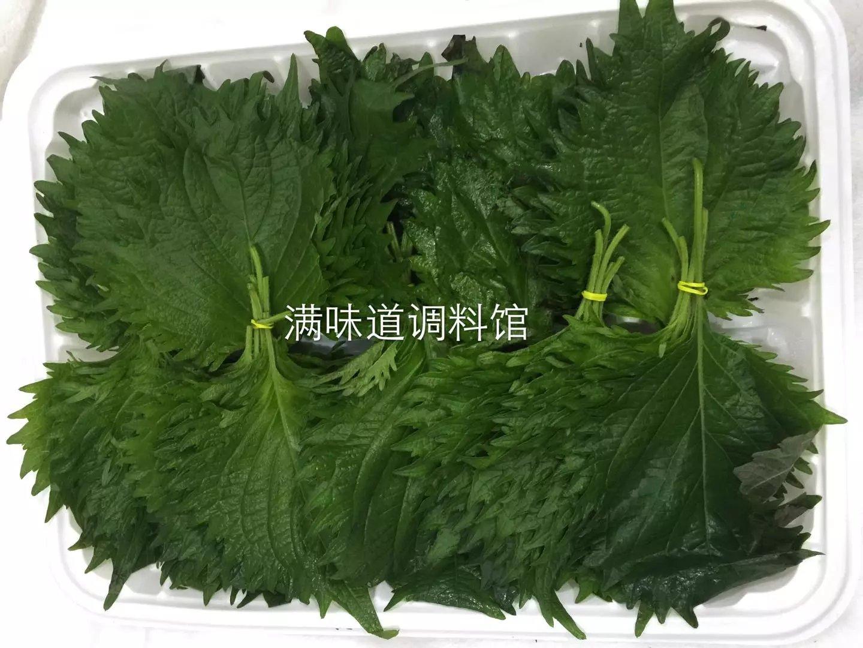 新鲜紫苏叶 大叶 苏子叶日本料理 烤肉生鱼片寿司刺身蔬菜