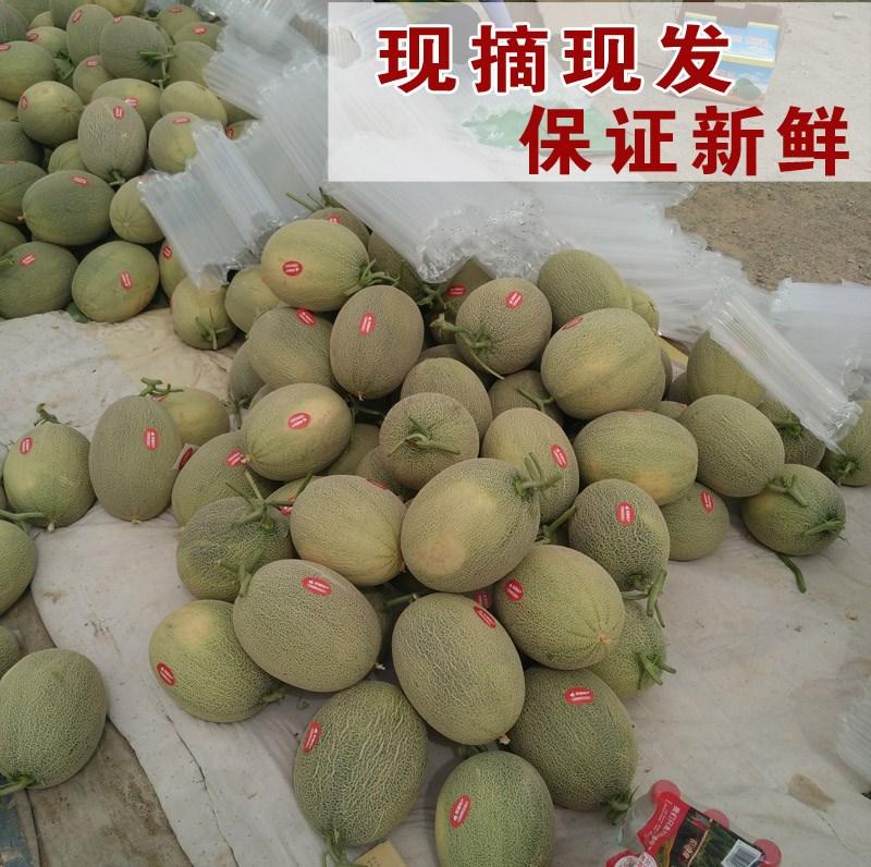 正宗新疆有机哈密瓜 西州蜜甜瓜香瓜蜜瓜网纹瓜新鲜水果原产地