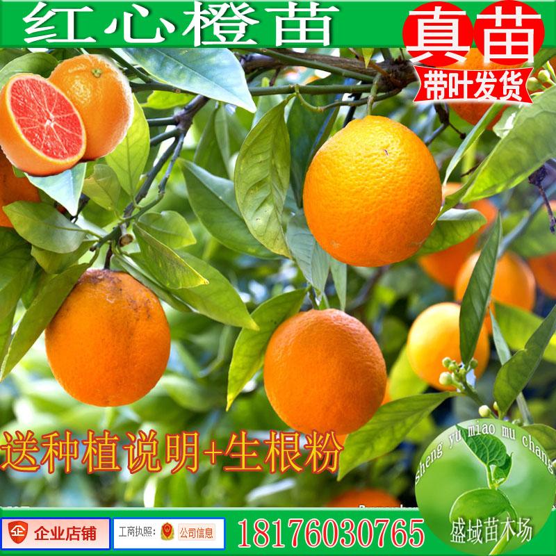 Садовые растения / Деревья / Фруктовые деревья Артикул 43179206236