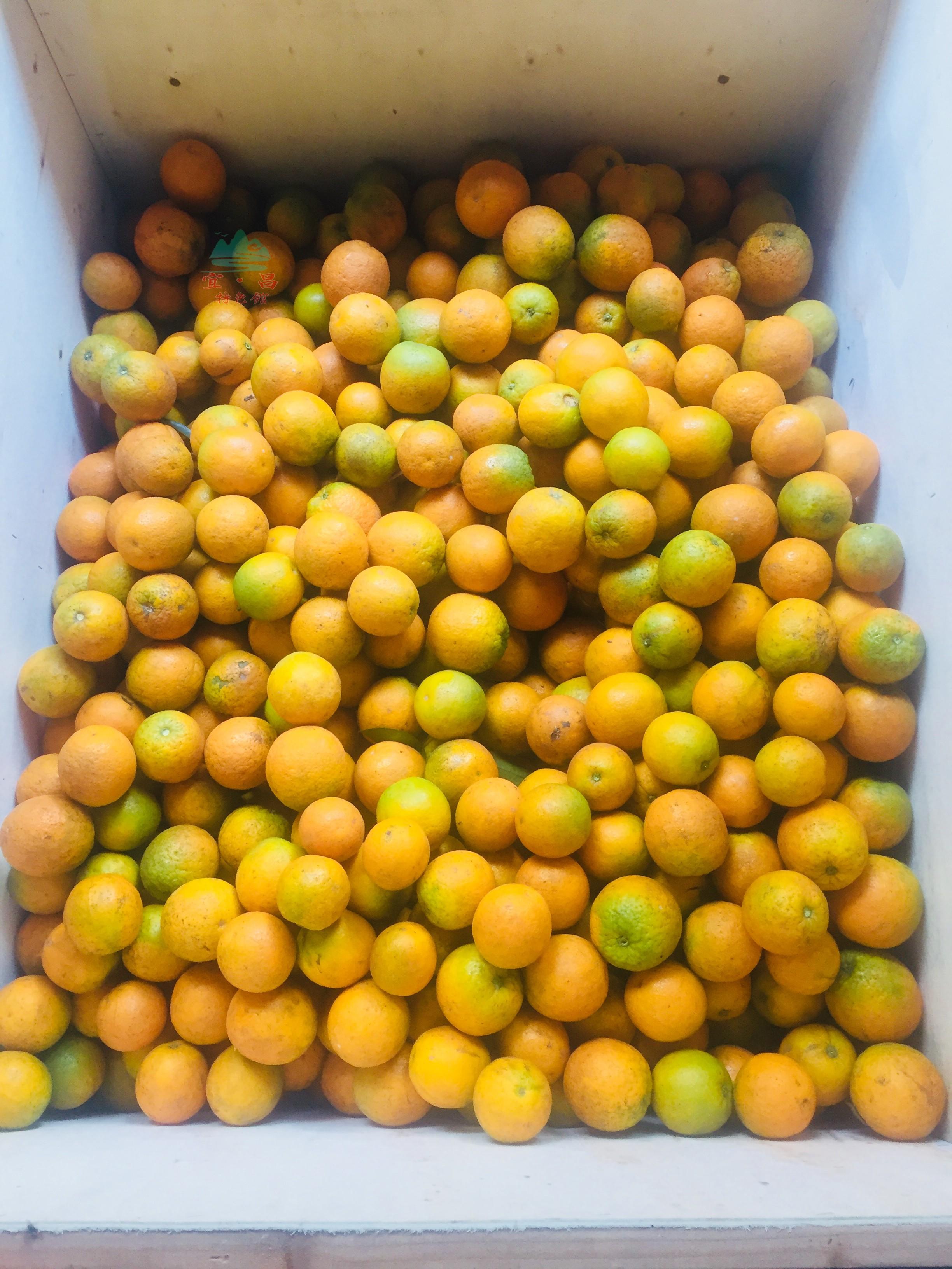 秭归夏橙现摘现发甜伦晚脐橙新鲜水果10斤非赣南湖北宜昌三峡包邮