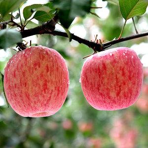 陕西特产洛川苹果红富士苹果水果新鲜陕西苹果6枚大果约4斤装包邮