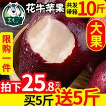 【买1送1】甘肃天水花牛苹果当季水果新鲜包邮蛇果平果带箱10斤