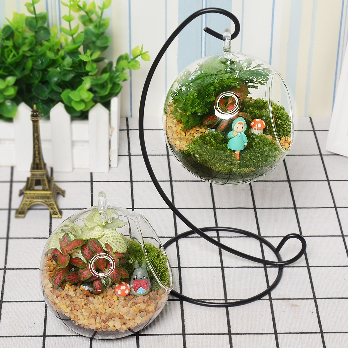 玻璃盆栽小植物