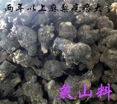 陈化火琉璃麻梨疙瘩烟斗手把件原料毛料手串弓料满瘤花鼠梨