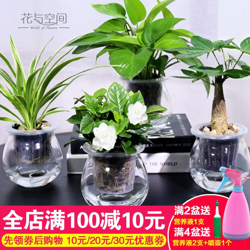 绿色植物 净化空气