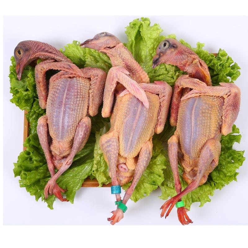 新鲜乳鸽2只+老鸽子肉1只  顺丰包邮 信鸽土鸽肉 3只装