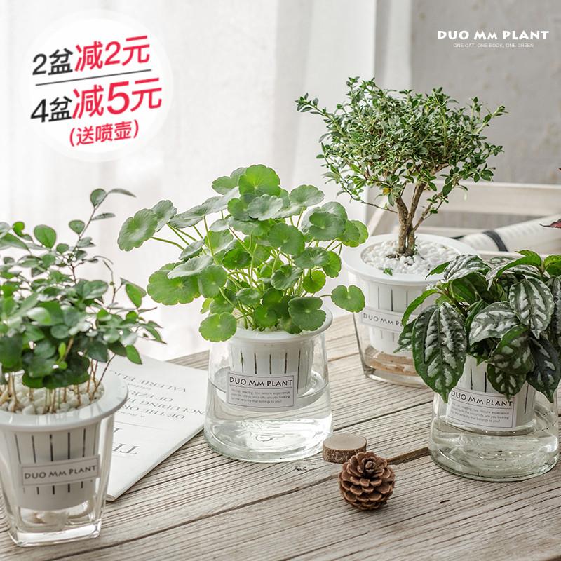 栀子花如意发财树室内办公室花卉植物盆栽芦荟绿萝水培绿植盆景图片