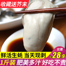 生蚝肉鲜活500克现剥批发新鲜去壳生蚝肉乳山牡蛎满3斤包邮