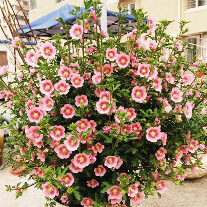 Книги о садоводстве Артикул 564075999267