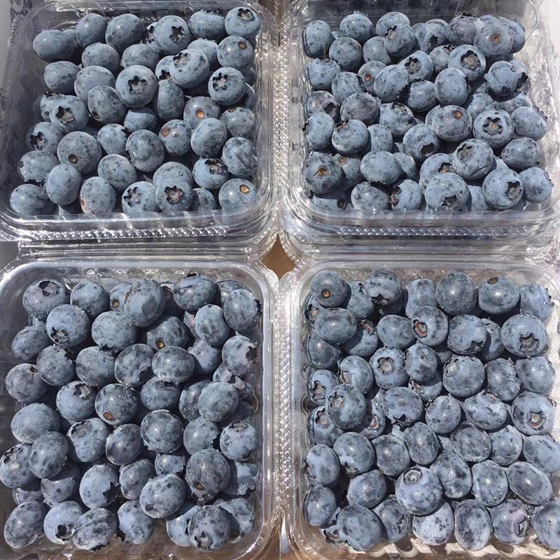 新鲜蓝莓4盒*500g国产蓝莓新鲜水果蓝莓鲜果6盒*750g鲜蓝莓发顺丰