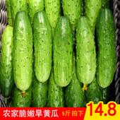 青瓜新鲜蔬菜生吃孕妇非白玉东北旱黄瓜 山东旱黄瓜水果小黄瓜5斤图片