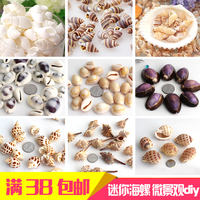 Natural shell small conch various mini treasure set micro landscape diy decoration home furnishings fish tank landscaping