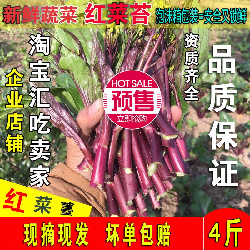 红菜苔湖北土特产洪山菜薹农家自种新鲜蔬菜红油菜薹紫菜台4斤