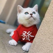 Summer pet cat, dog and dog clothes can be customized text pet parent-child outfit cotton breathable T-shirt
