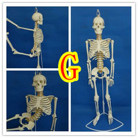 Skeleton model 45cm85cm human bone model whole body spine bone spine model bone specimen