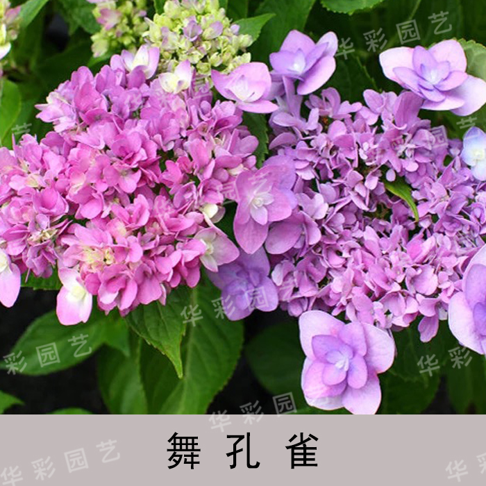 Книги о садоводстве Артикул 577064100438