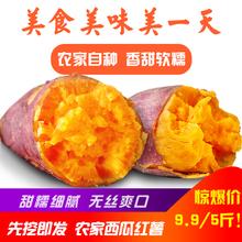 新鲜红薯5斤地瓜现挖农家自种板栗香番薯西瓜红蜜薯红心迷你红薯