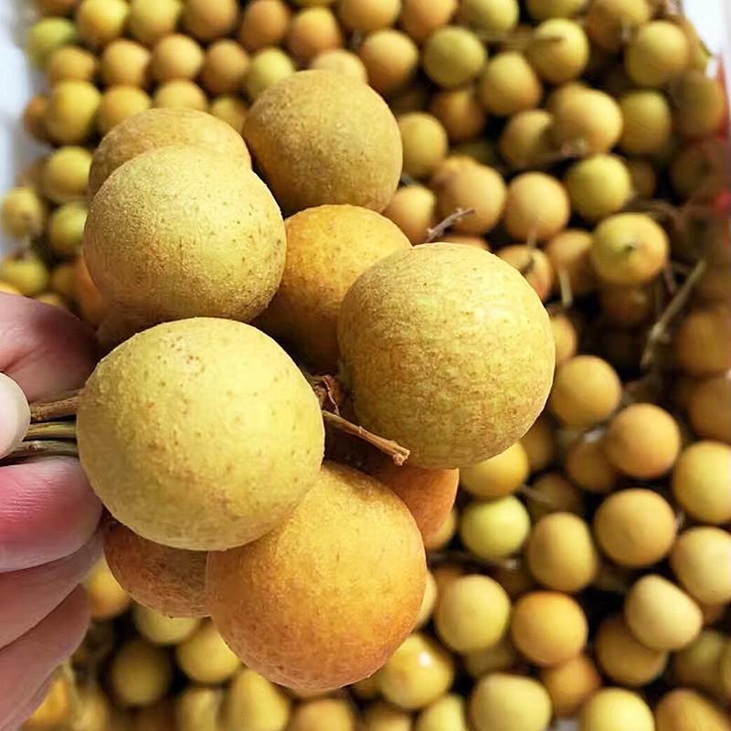现货 泰国进口龙眼2斤鲜桂圆鲜甜多汁时令水果鲜龙眼发顺丰