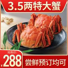 10只8只大闸蟹鲜活特大螃蟹公母蟹3.5两礼盒现货六月黄阳澄湖镇装
