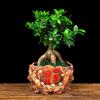 办公桌盆景小花盆