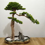 Japanese courtyard Zen simulation cliff cypress pine craft potted potted bonsai Chinese hotel lobby decorative plant ornaments