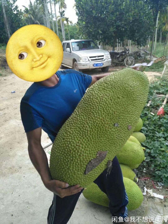 菠萝蜜新鲜三亚