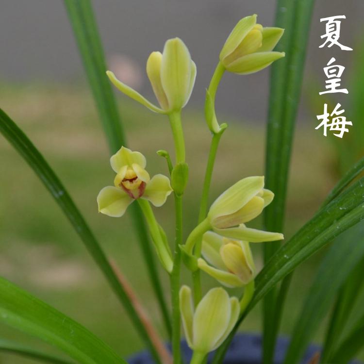 Комнатные растения Артикул 549089366384