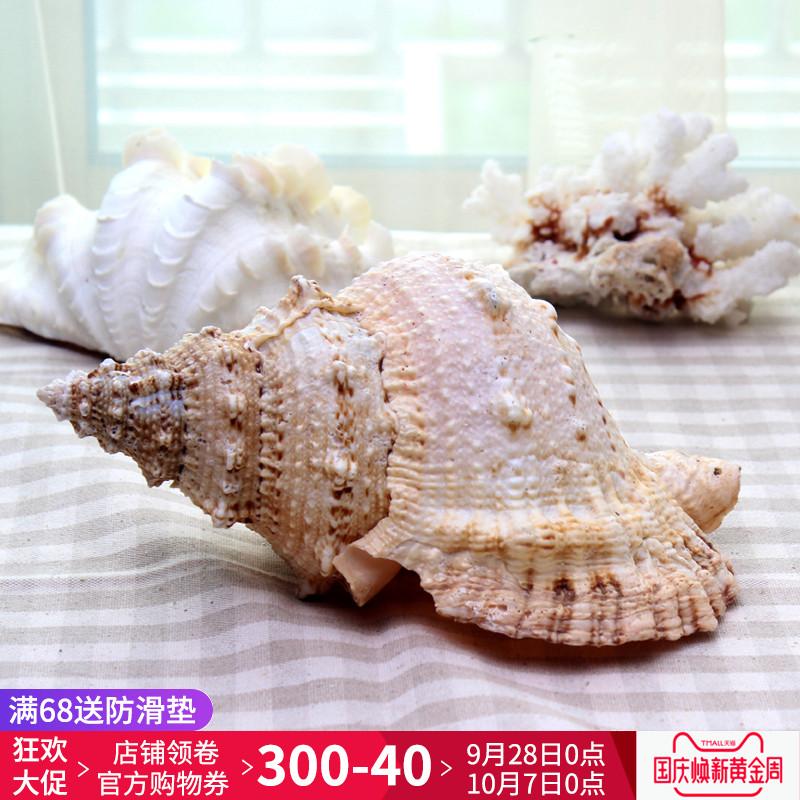 海洋贝壳饰品