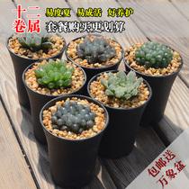 Fuqiang Flower Novice Jade Dew Life Package Multi-meat combination more favorable package to send Vientiane Basin 12 rolls of genus