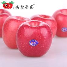 烟台苹果红富士南村果园紫弘6粒3.5斤85栖霞富士苹果新鲜水果苹