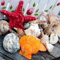 Natural shell conch starfish aquarium aquarium landscaping decoration wall drifting bottle diy material 250 g