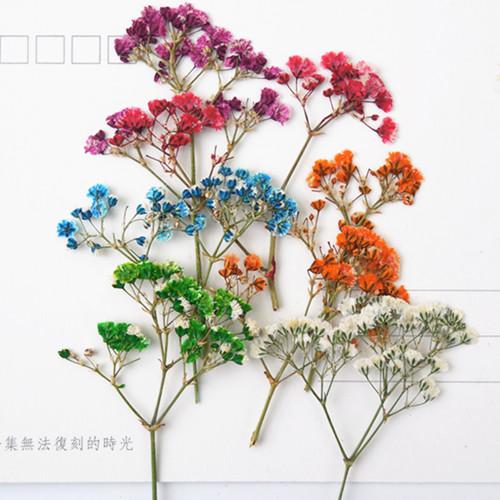 Высушенные цветы Артикул 44903056582