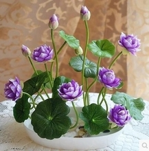 Pottery plants flowers flowers lotus seeds water lotus