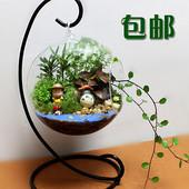 包邮 微景观 创意植物 迷你盆栽 DIY植物 生日礼物 苔藓生态瓶