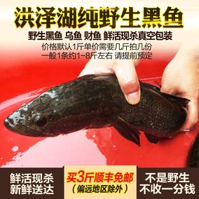 洪泽湖野生黑鱼500g 新鲜财鱼 蛇头鱼 生鱼 野乌鱼 乌棒 鲜活现杀
