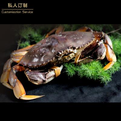 【环球鲜生】进口珍宝蟹太子蟹海鲜水产鲜活螃蟹700克/只福建包邮