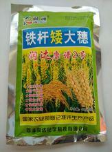 铁杆矮大穂小麦水稻壮杆增产防倒伏增产水稻专用增收生根粉