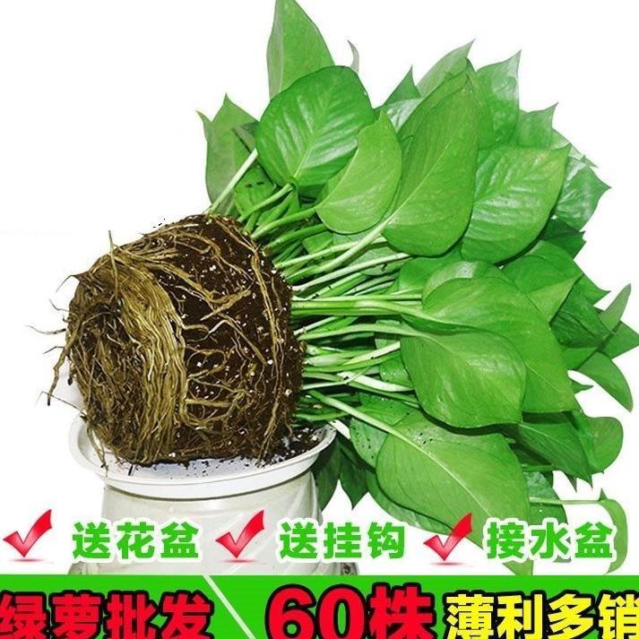Искусственные цветы / Товары для садоводства Артикул 599011430606