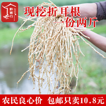Now dig fresh houttuynia fold side of the leaf leaves 2 Jin containing Guizhou Sichuan cold salad Wild Tender Ear