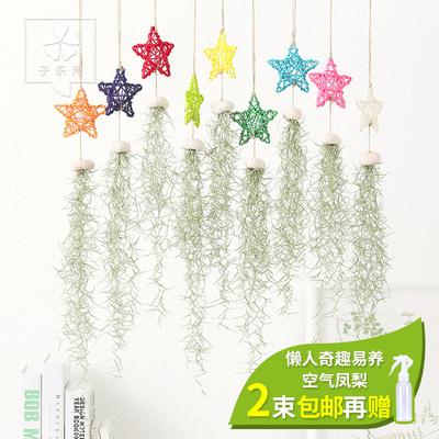 壁挂植物 客厅