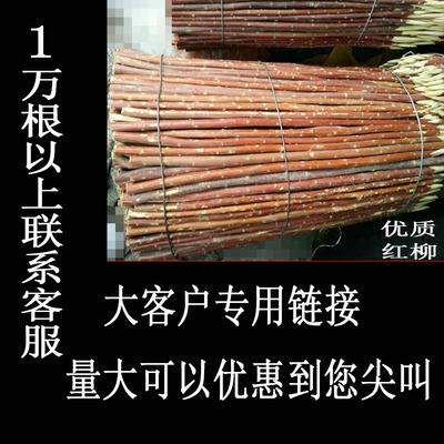 红柳签烧烤签子30 35 40 50厘米正宗新疆烤肉签红柳木枝红柳签子