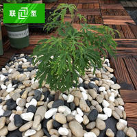 Connected to the outdoor floor pebbles Decorative pebbles 2-3cm/piece One kilogram Gardening color stone
