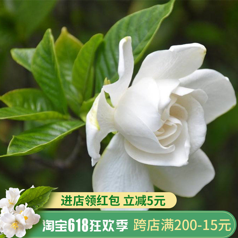 Книги о садоводстве Артикул 594403578302