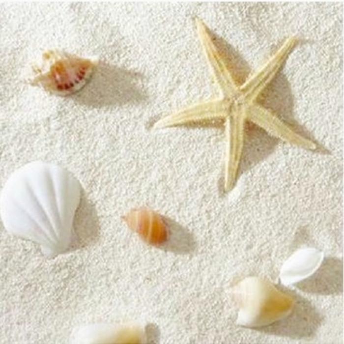 鱼缸珊瑚沙