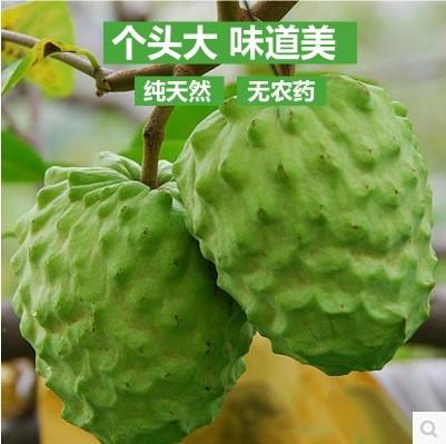 新鲜水果 进口水果 泰国释迦 潘荔枝 佛透果 5-6个 5斤/箱