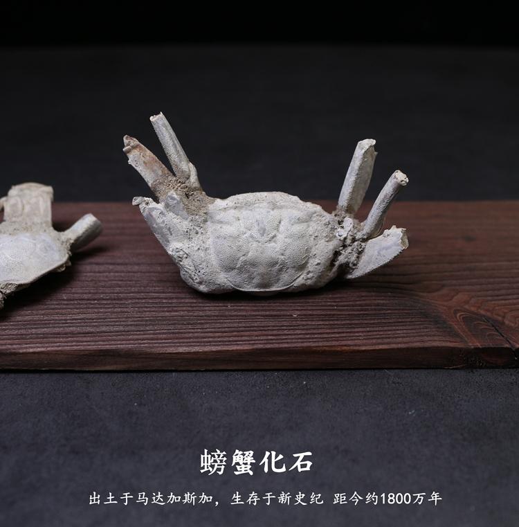 Ископаемые Артикул 565446993791